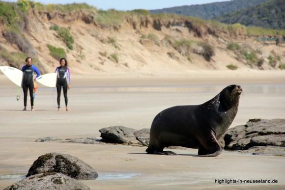 Seelöwe und Surfer in den Catlins