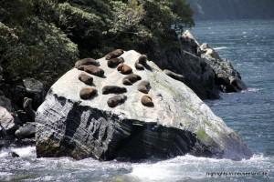 Seehunde auf einem Stein
