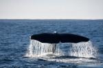 Kaikoura & Whale Watching
